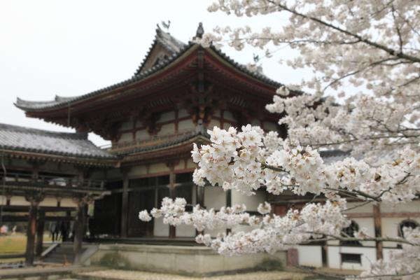 kyoto_2012ms_037.JPG
