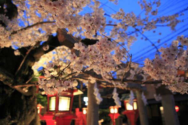 kyoto_2012ms_098.JPG
