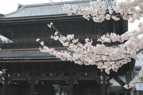 kyoto_2012ms_101.JPG